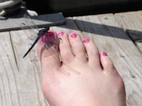dragonfly on toes
