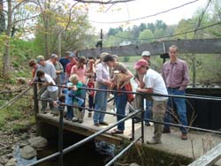 Viewing the fish ladder in Damariscotta Mills and looking for alewives.