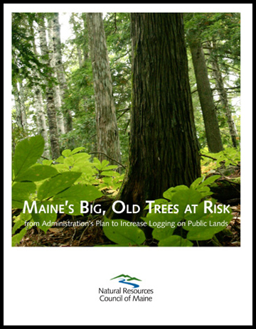 Big Old Trees report