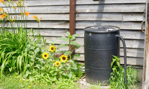 Catch & Reuse Rainwater
