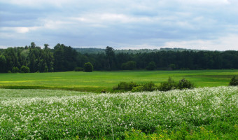 A field in Dover-Foxcroft