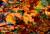 Fall foliage, Fourth Lake, by Erika Zambello