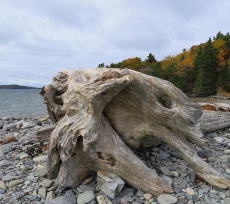 drift-wood-on-way-to-bar-island-by-jayne-winters