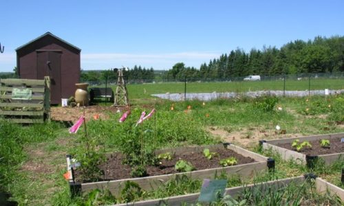 Presque Isle Community Garden Off to a Great Start!