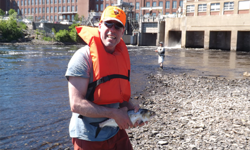Creature Feature: American Shad