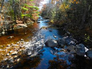 Ducktrap Preserve Lincolnville by Judy Berk1
