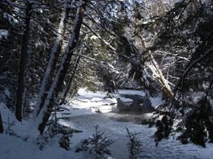Ducktrap Preserve Lincolnville by Judy Berk
