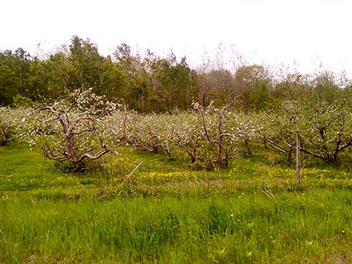 Lakeside Orchard