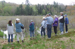 Lobster Cove Meadow - a great place for birding. Photo by Allison Childs Wells