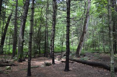 Robinson Woods