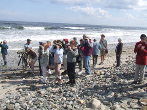 Birders march to the sea and find Semipalmated Sandpipers, among other species.