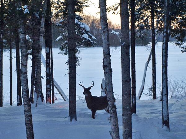 Hunter Haven deer in Sangerville