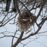 winter nest