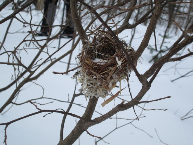 winter nest