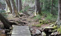 Acadia National Park My Maine