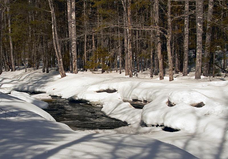 Sunkhaze Stream by Pam Wells