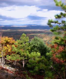 Pitch pine woodland on Pleasant Mtn RVP