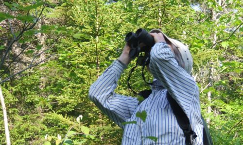 Birding the Proposed National Park Lands Near Baxter State Park