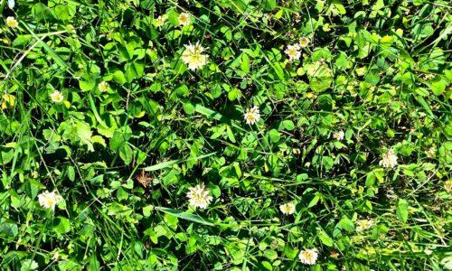 Flower or Weed?