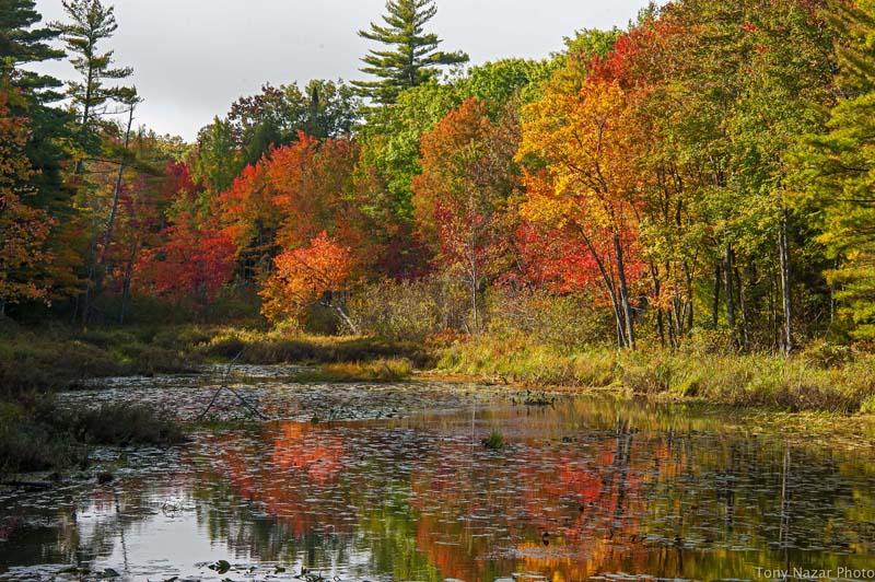 Fayette in fall