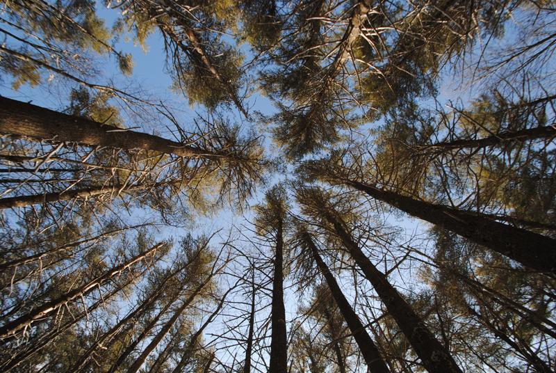 Trees at the Rachel Carson National Wildlife Refuge