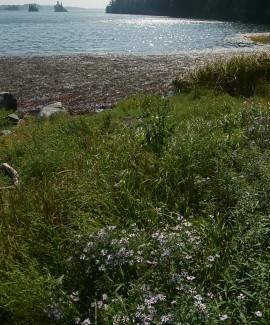 Cobscook Bay