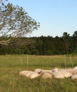 Crystal Spring Farm by Beth Comeau