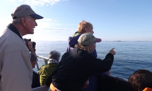 Photos from NRCM's Puffin Cruise on Muscongus Bay