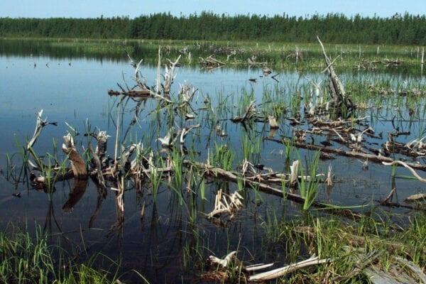 Round Pond PRL