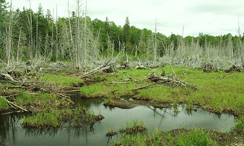 Salmon Brook Lake Bog Public Reserved Land