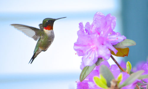 hummingbird by Rebecca Tripp