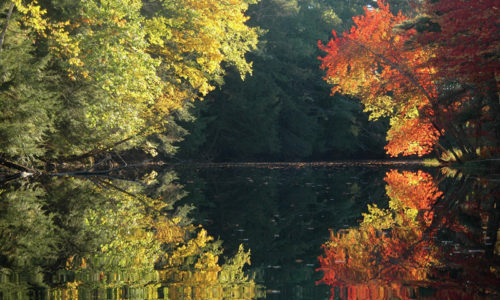 Autumn Symmetry by Steve Cartwright