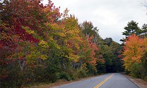 scenic roadside