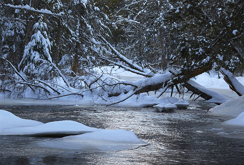 icy stream by Pam Wells