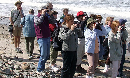 May 14, 2016: Birding at Acadia National Park, Southwest Harbor