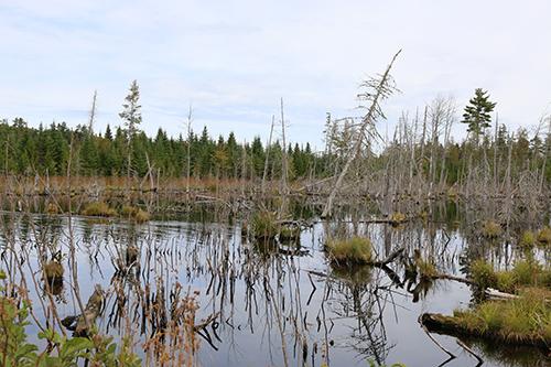 Beaver Bog