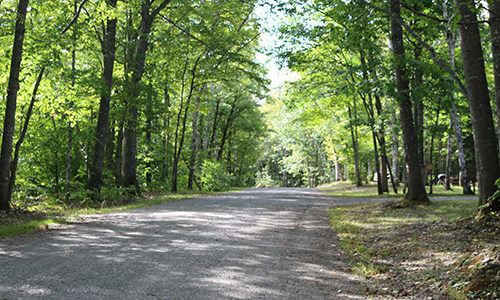 Road through Matagamon Wilderness Campground