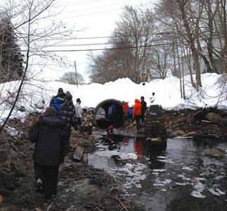 St. George School Aims to Restore Alewives
