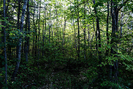 Sun filtering through the trees in the Katahdin Woods and Waters Recreation Area