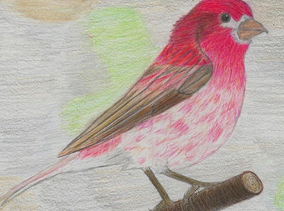 """Colorful and Bright: King Middle School Students Begin """"It's for the Birds"""" Project"""