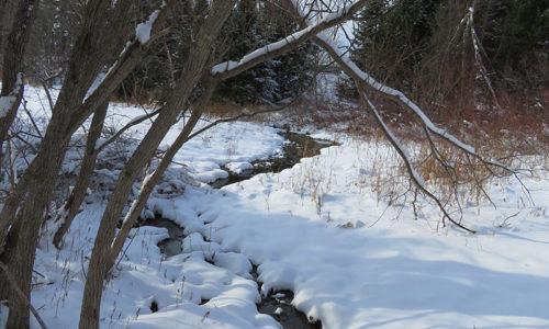 stream at Viles Arboretum