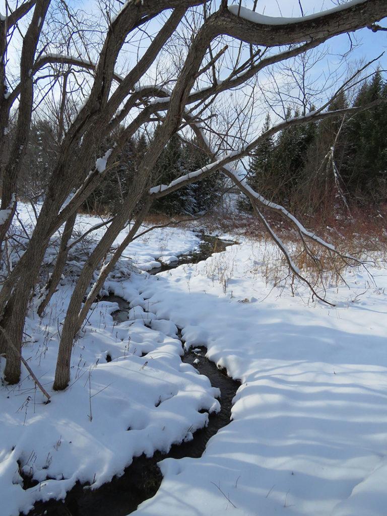 stream at Viles Arboretum Jayne Winters