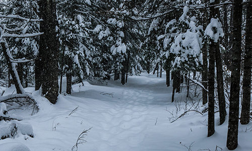 Snowy Trail through Lily Bay State Park