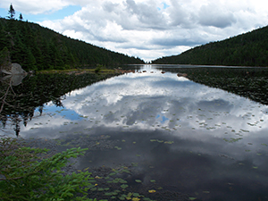 Speck Pond, near the top of Old Speck Mountain by Linda Woods