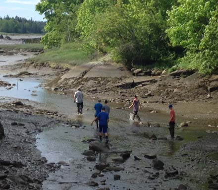 St. George Middle School students study alewives