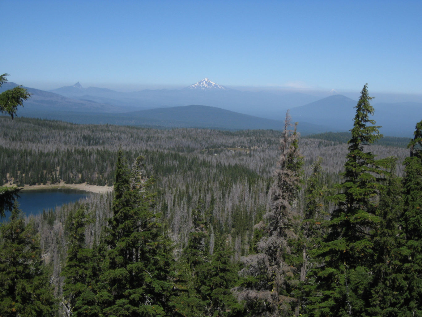 View from Tam McArthur Rim of lodgepole pine and whitebark pine killed by mountain pine beetle within the prior 10 years