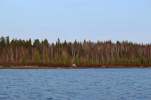 shoreline of Fifth Pond