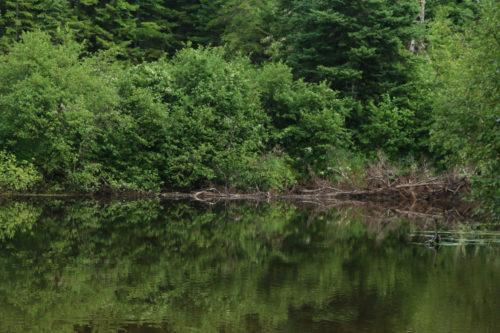 Canoeing Allagash Stream