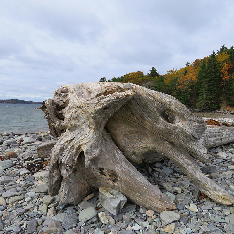drift-wood-on-way-to-bar-island-by-jayne-winters