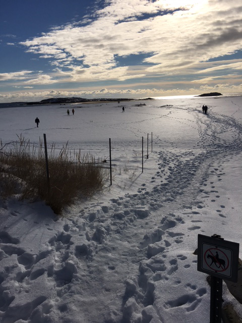 Popham Beach in winter by Diane Schetky